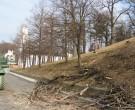 Forstarbeiten-02-2011-IMG_0495