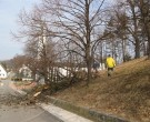 Forstarbeiten-02-2011-IMG_0499