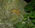 Naturaufnahmen-2011-P7178873