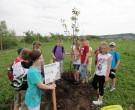 Baumpflanzung-2011-DSC00548