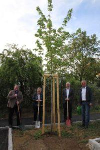 Lisztgasse Baumpflanzung-2020